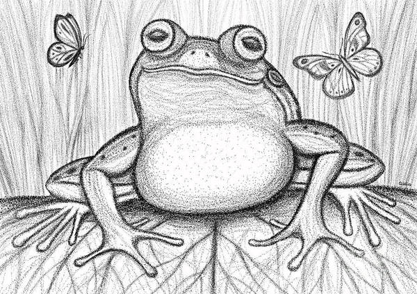Wall Art - Drawing - Spotted Frog by Nick Gustafson