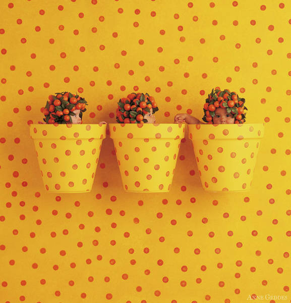 Nursery Photograph - Spotted Pots by Anne Geddes