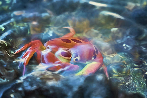 Photograph - Spotted Rock Crab by Susan Rissi Tregoning