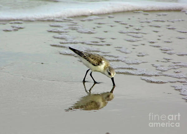 Photograph - Spotted Sandpiper Reflection by D Hackett