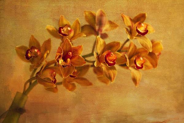 Oriental Photograph - Spray by Rebecca Cozart