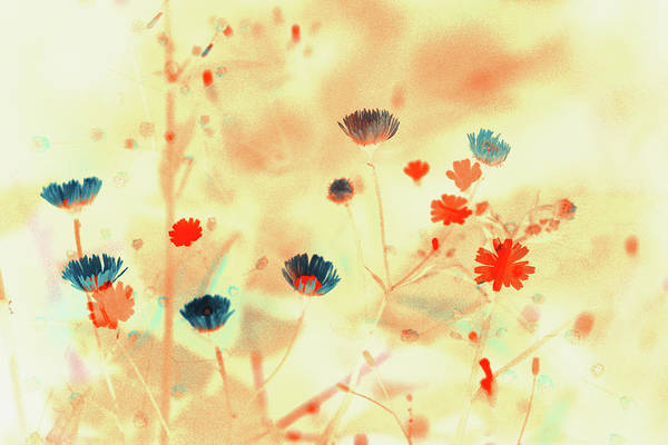 Wall Art - Painting - Sprays Of Flowers  by Bonnie Bruno