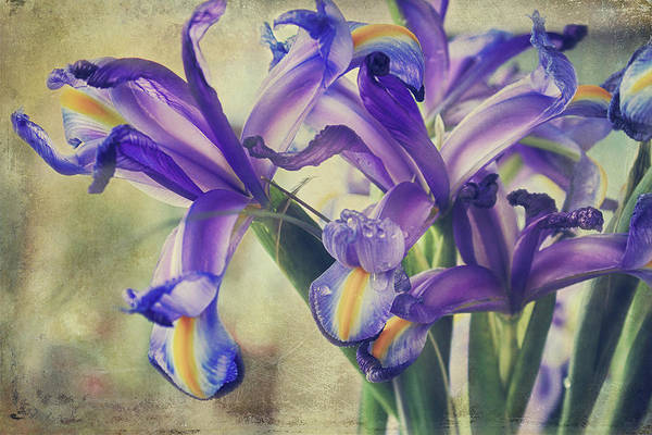 Iris Flower Photograph - Spread Love by Laurie Search