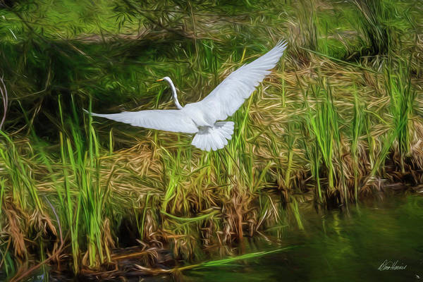 Photograph - Spread Your Wings by Diana Haronis