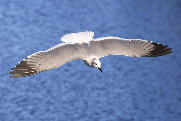 Wall Art - Photograph - Spread Your Wings by Donna Kennedy