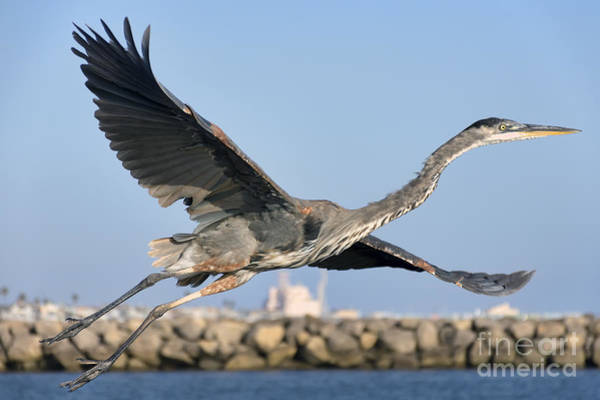 Photograph - Spread Your Wings by Eddie Yerkish