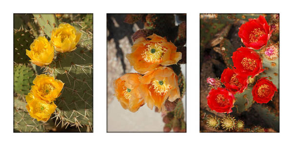 Photograph - Spring - Desert Style by Jill Reger