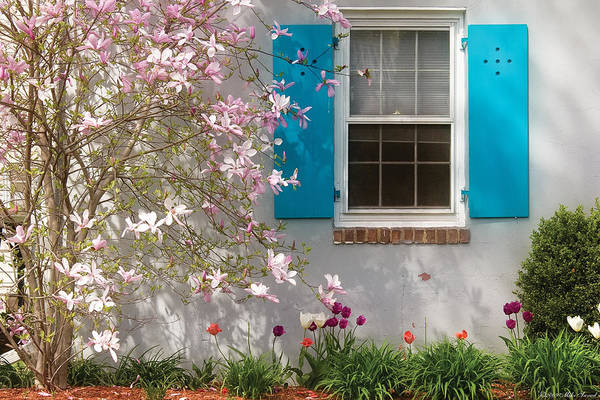 Photograph - Spring - Spring Window by Mike Savad