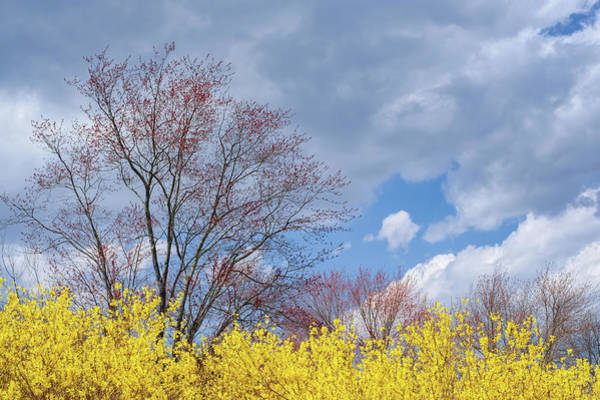 Photograph - Spring 2017 by Bill Wakeley