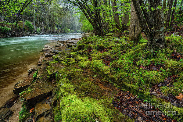 Photograph - Spring Along Elk River by Thomas R Fletcher