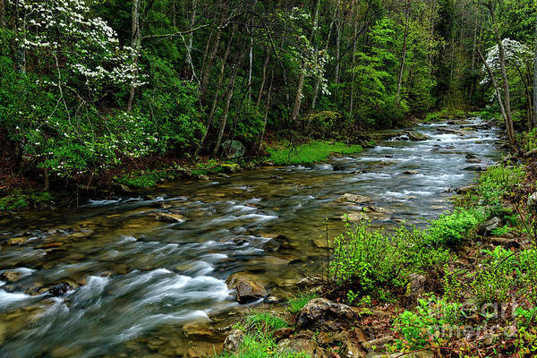 Photograph - Spring Along Grassy Creek by Thomas R Fletcher