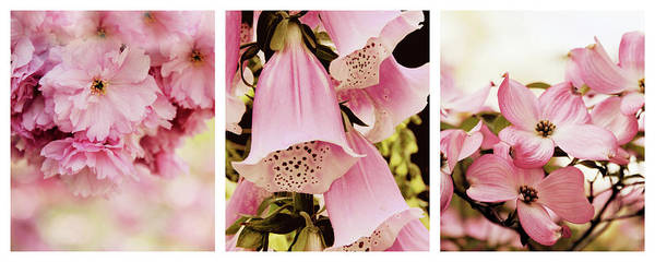 Photograph - Spring Assemblage Triptych by Jessica Jenney