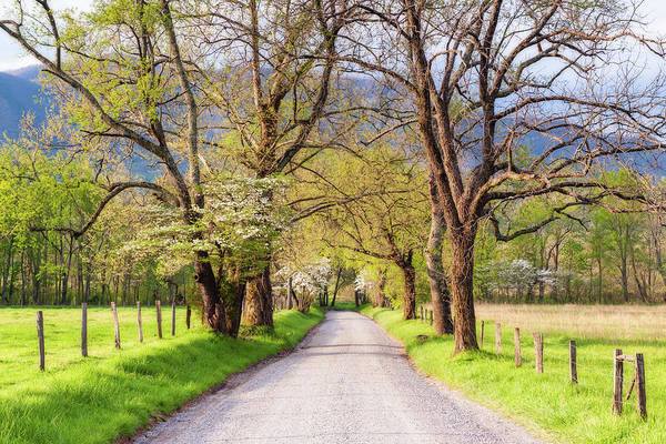 Photograph - Spring At Cades Lane by Michael Blanchette