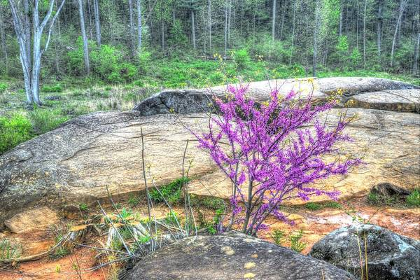 Wall Art - Photograph - Spring At Devils Den by Paul W Faust - Impressions of Light