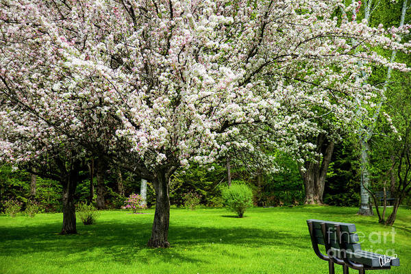Photograph - Spring At The Park by Alana Ranney