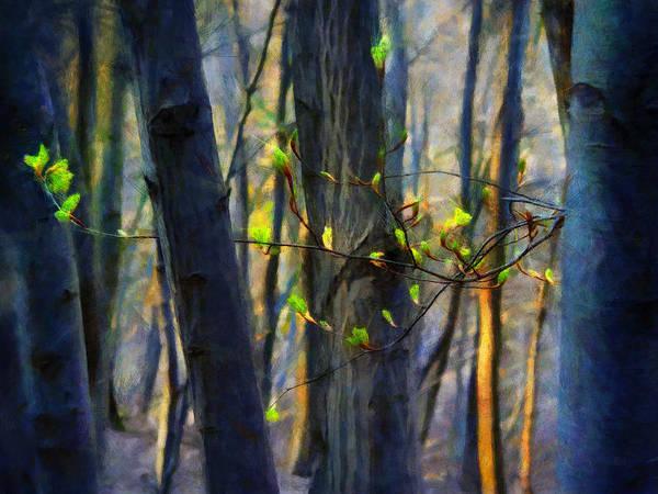 Painting - Spring Awakening In The Forest by Menega Sabidussi