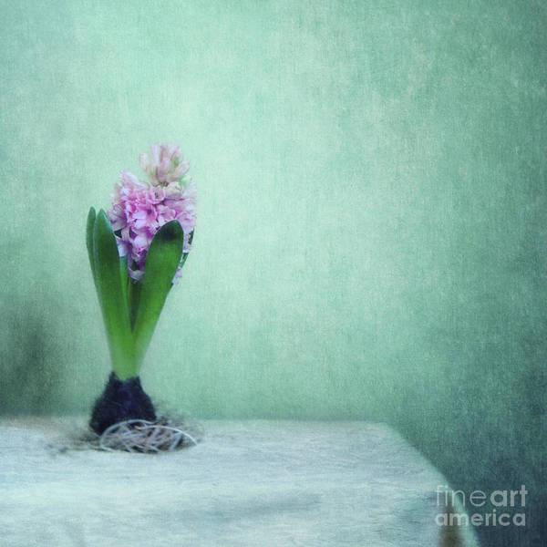 Wall Art - Photograph - Spring Awakening by Priska Wettstein