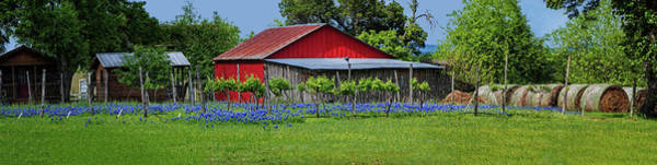 Photograph - Spring Beauty In The Hill Country Panorama by Lynn Bauer
