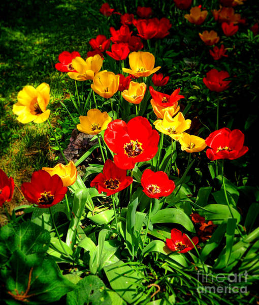 Photograph - Spring Beauty by Olivier Le Queinec