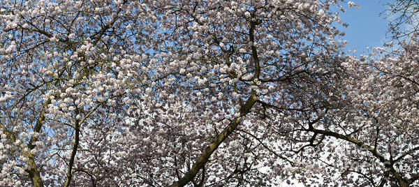 Rosaceae Wall Art - Photograph - Spring Beauty by Tim Gainey