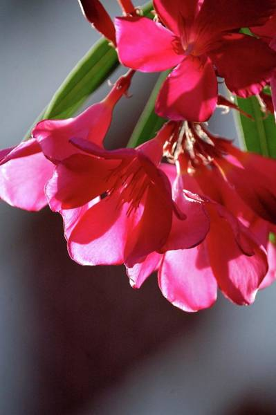 Photograph - Spring Blooming by Jerry Sodorff