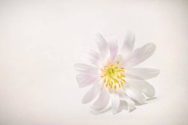 Spring Bloom Photograph - Spring Blossom by Scott Norris