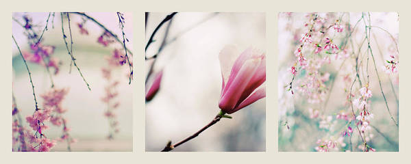 Photograph - Spring Blossom Triptych by Jessica Jenney