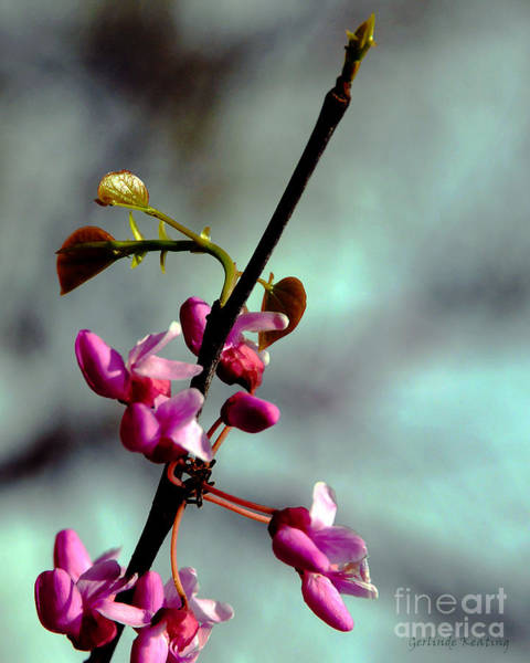 Photograph - Spring Blossoms by Gerlinde Keating - Galleria GK Keating Associates Inc