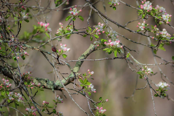 Photograph - Spring Blossoms 2 by Mark Mille