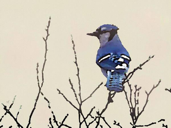 Digital Art - Spring Bluejay by Shelli Fitzpatrick
