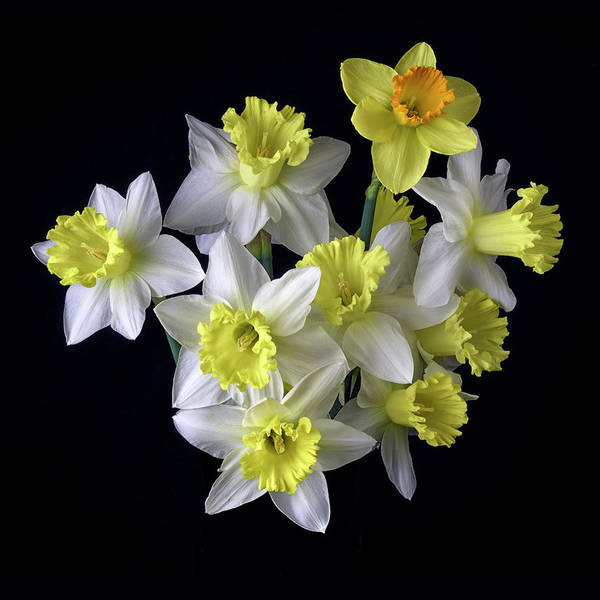 Daffodils Photograph - Spring Bouquet by Don Spenner