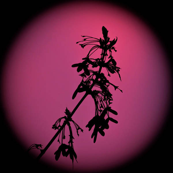 Photograph - Spring Branch Silhouette Square by Terry DeLuco