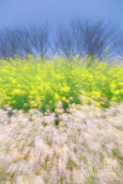 Photograph - Spring Breeze by Awais Yaqub