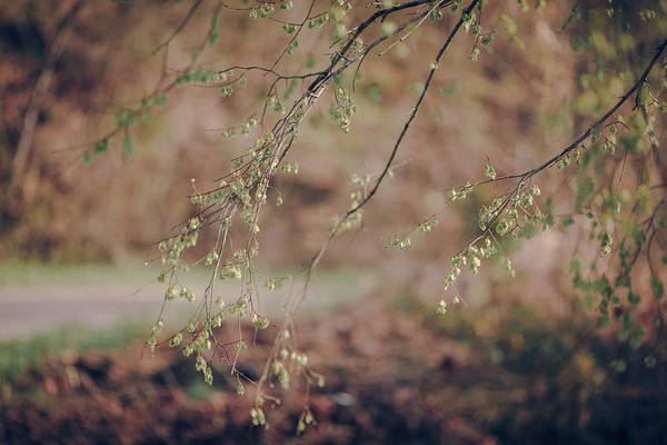 Wall Art - Photograph - Spring Buds by Amber Flowers