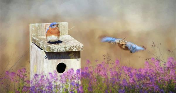 Boyd Photograph - Spring Builders by Lori Deiter