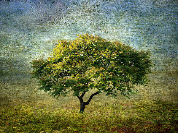 Arbor Digital Art - Spring Canvas by Jessica Jenney