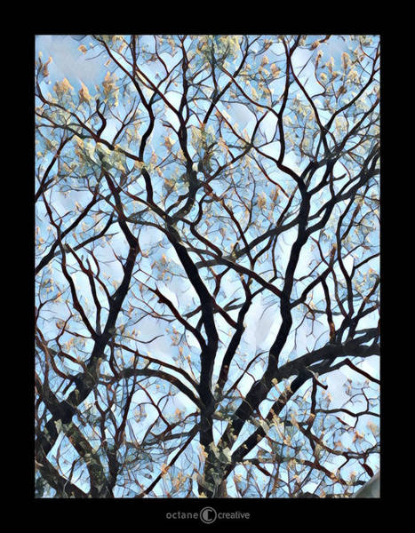 Photograph - Spring Cloud Tree by Tim Nyberg