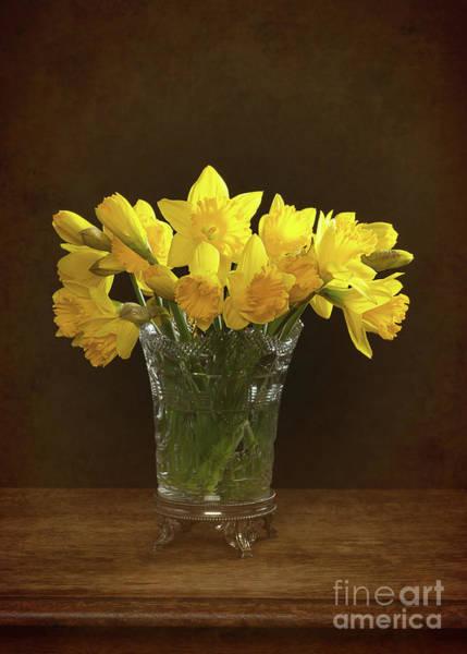 Wall Art - Photograph - Spring Daffodils by Amanda Elwell