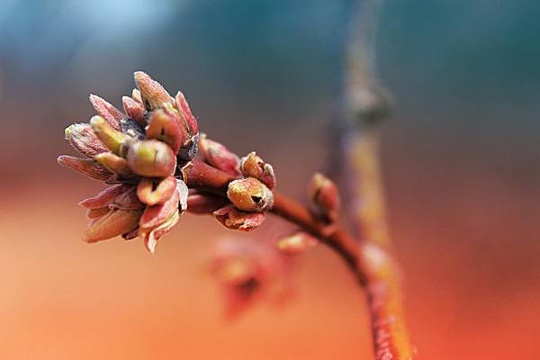 Photograph - Spring Dawning 2 by Scott Hovind