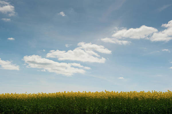 Photograph - Spring Day Clouds by Helen Northcott