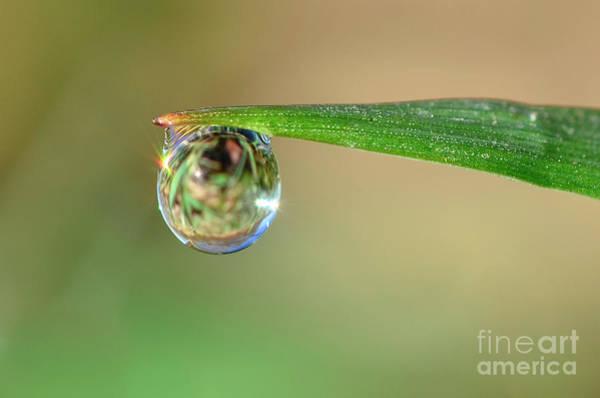 Photograph - Spring Dew by Katie Joya