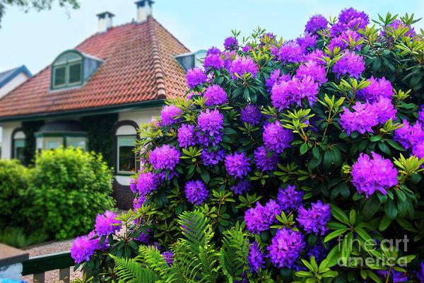 Photograph - Spring  Dutch Garden  by Ariadna De Raadt