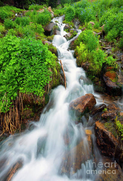 Colorado Springs Photograph - Spring Falls by Mike Dawson