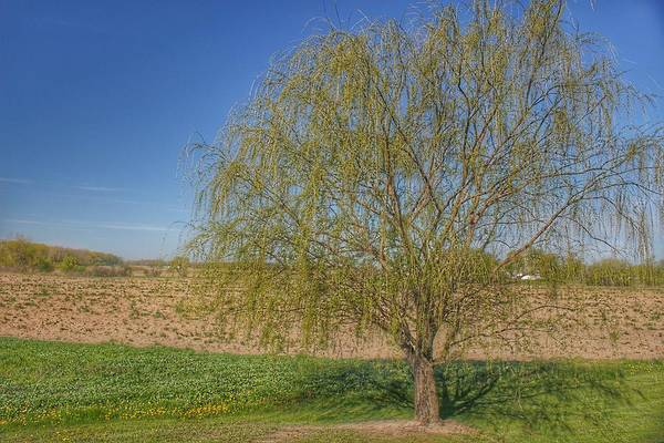 Photograph - 9006 - Spring Farm Willow Tree by Sheryl Sutter