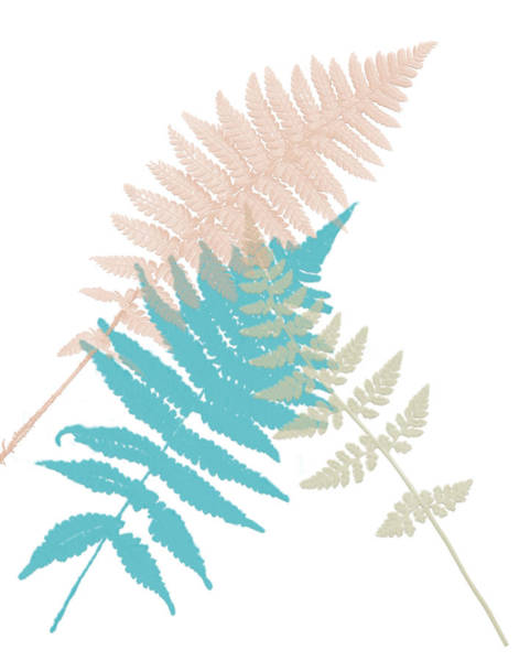 Wall Art - Painting - Spring Fern 2 by Bonnie Bruno