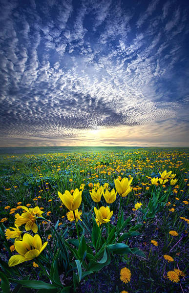 Garden Park Photograph - Spring Fever by Phil Koch