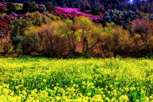Half Moon Bay Photograph - Spring Field by Garry Gay
