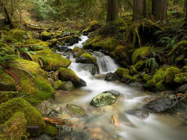 Ivanhoe Photograph - Spring Flow by Todd Sarah Ivanhoe