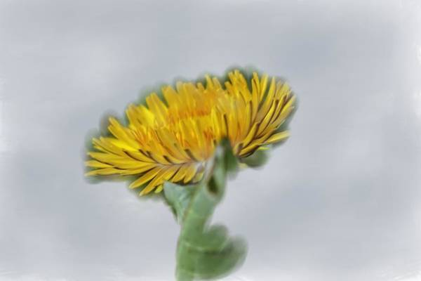 Photograph - Spring Flower Artistic by Leif Sohlman