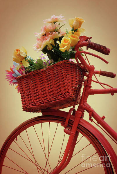 Wall Art - Photograph - Spring Flower Bike by Carlos Caetano